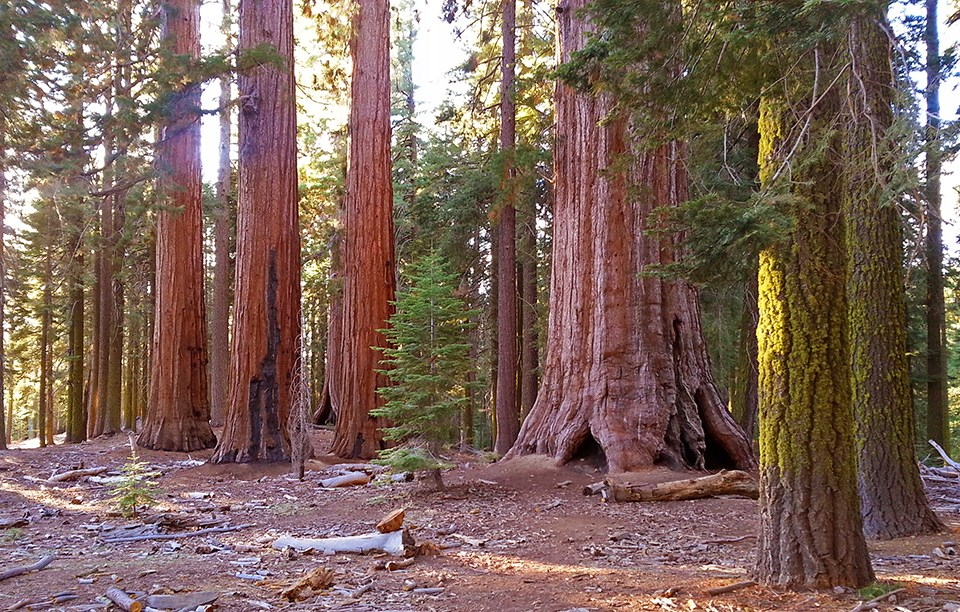 Your RV trip to the legendary Yosemite National Park