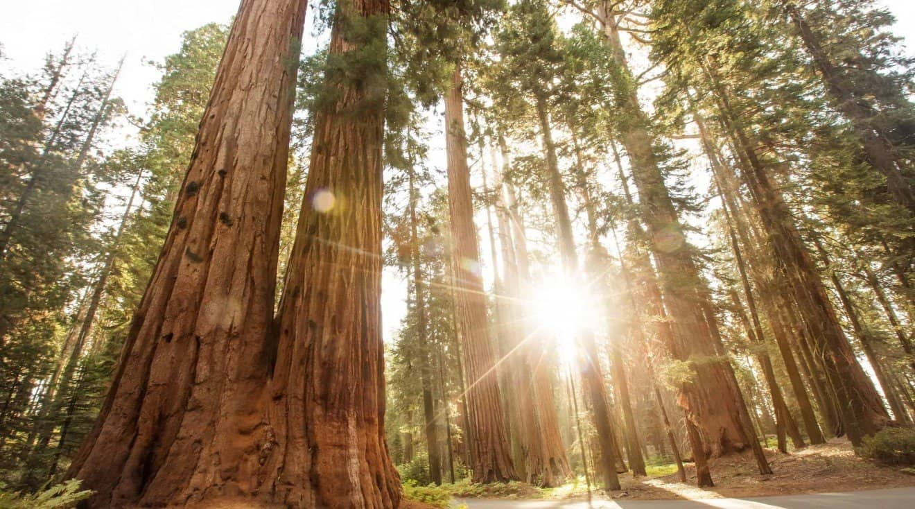 Your Trip to Gorgeous Sequoia National Park | MangoRV Guide